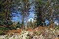 Torsby N, Sweden - panoramio (1).jpg