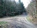 Track Junction in Redlands Wood - geograph.org.uk - 326152.jpg