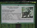 Tragelaphus strepsiceros in the Silesian Zoological Garden 03.JPG
