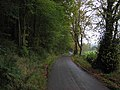 Tree-lined road in the Stinchar valley - geograph.org.uk - 262975.jpg