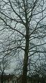 Tree (32697499627).jpg