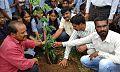 Tree planting in penchikaldina.jpg