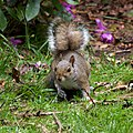 Trentham Monkey Forest 15.jpg