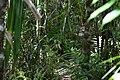 Typical tarsier habitat (9275135835).jpg