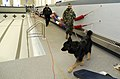 US Navy 090224-N-8467N-001 Master-At-Arms 3rd Class Shiella McLean, assigned to Naval Submarine Base New London, and base police officer Robert Faulise use military working dog, Bak, to search the base pool area for a simulated.jpg
