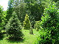 University of Tennessee Arboretum - holly collection.JPG
