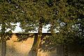 Vaux-le-Vicomte, château-PM 37385.jpg