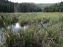 Veľké Osturnianske jazero 4MS7.jpg