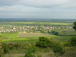 View of Abasár with vineyards from Sár Hill.jpg