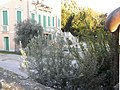 Villa Contarini Giovanelli Venier (Vo' Vecchio, Vo') 03.jpg