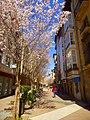 Vitoria - Calle Siervas de Jesús 5.jpg
