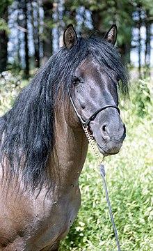 Vyatka horse.jpg