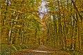 Waldweg Im Herbst 3 4 (128871847).jpeg