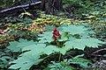 Wapta Falls Trail IMG 4948.JPG