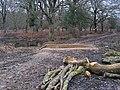 Warwickslade Cutting, nature makes a new stream - geograph.org.uk - 1726712.jpg