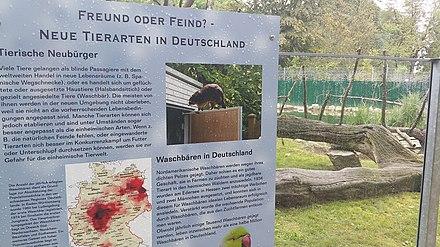 invasive arten deutschland beispiele