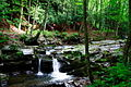 Waterfall-Trail - West Virginia - ForestWander.jpg
