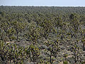 Wee Thump Joshua Tree Wilderness 2.jpg
