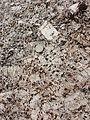 Weinsberger Granit sl2.jpg