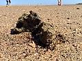Wellington Point Island Dead Coral (9754753845).jpg