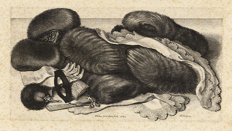 Soubor:Wenceslas Hollar - Group of fur muffs on table.jpg