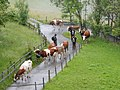 Wengen, 3823 Lauterbrunnen, Switzerland - panoramio (6).jpg