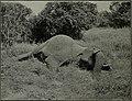 Western field (1905) (14592303909).jpg