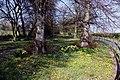 White's Plantation at Radley - geograph.org.uk - 1232475.jpg