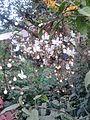 White petals.jpg
