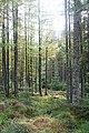Whiteash Forest - geograph.org.uk - 265471.jpg