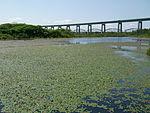 Whitefish Pond and Sault International Bridge 2.JPG