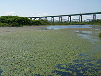 Whitefish Pond and Sault International Bridge 2.JPG
