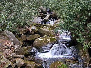 Foothills Trail - Picture of a creek along the Upper Whitewater Falls section