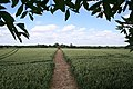 Wide path - geograph.org.uk - 865177.jpg