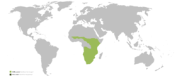 Distribution of lions in Africa