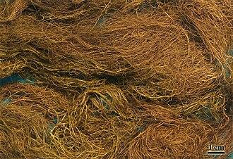 Wila (lichen) - Image: Wila Big