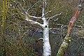 Winter Stream 2 (6852024153).jpg