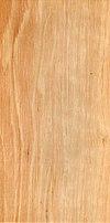 Wood Carpinus betulus.jpg