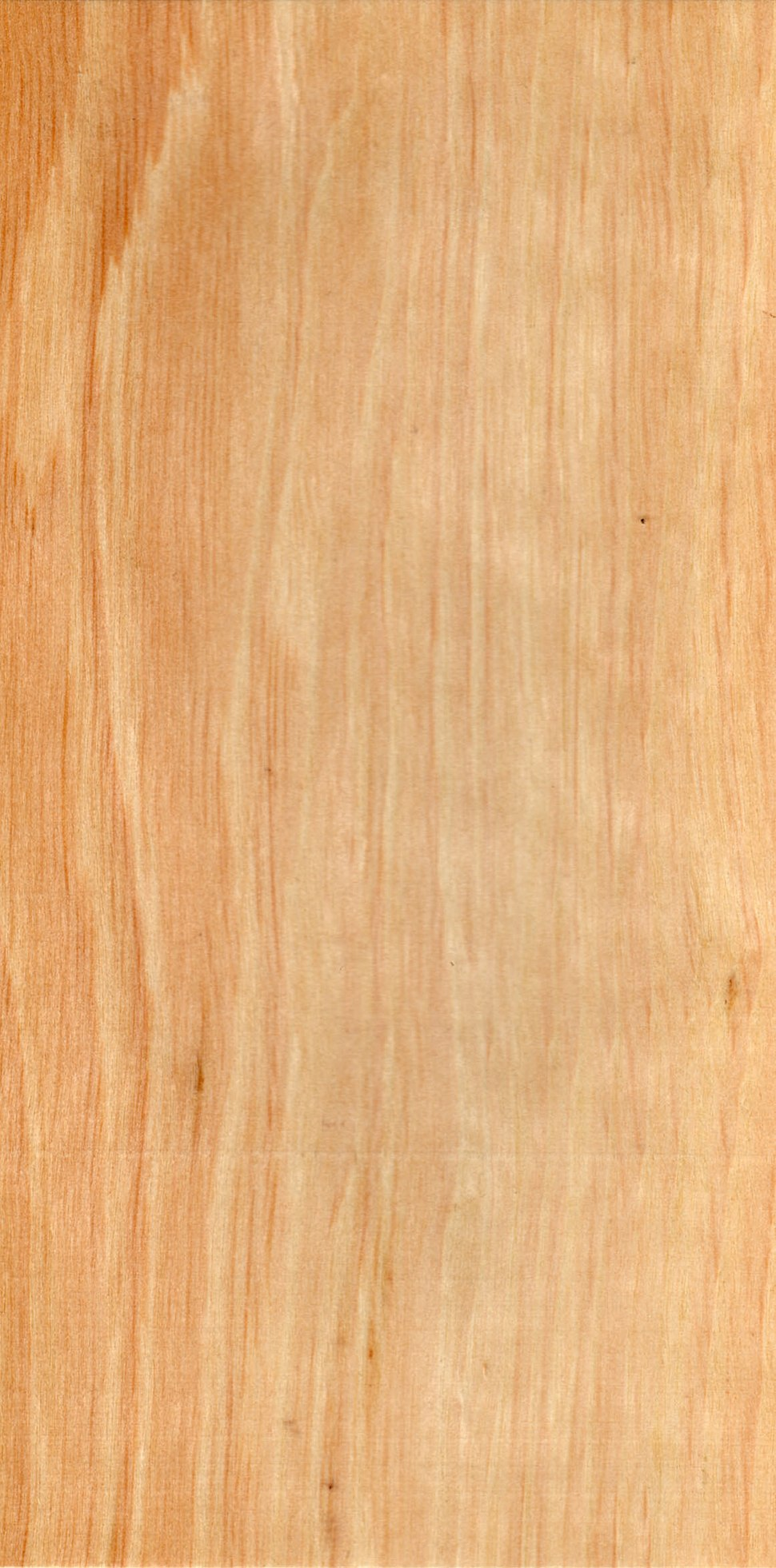 Wood Carpinus betulus