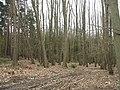 Woodland, Grug Hill - geograph.org.uk - 988669.jpg