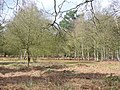 Woodland, Norney - geograph.org.uk - 719892.jpg