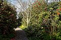 Woodland Garden camellia path at RHS Garden Hyde Hall, Essex, England.jpg