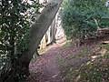 Woodland footpath - geograph.org.uk - 1184751.jpg
