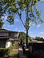 Worker trimming a tree next to a house.jpg