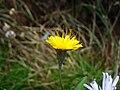 Yellow8.jpg