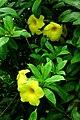 Yellow flowers, Jatiyo Sriti Shoudho (3318699278).jpg