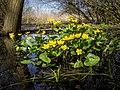 Yellow of Spring (33384287490).jpg