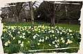 Yippee^ Spring again^ Home Park, Hampton Court. - panoramio.jpg