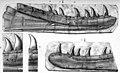 Zanclodon cambrensis.jpg