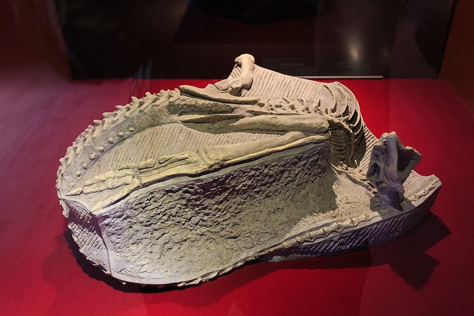 Zigong Dinosaur Museum Agilisaurus
